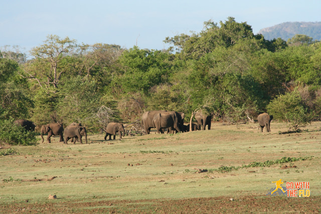 Elephant tribe in Uda Walawe National Park