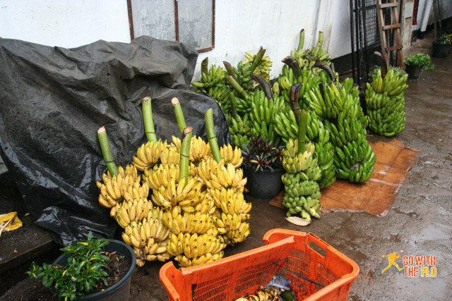 Bananas in all sizes and colors in Nuwara Eliya