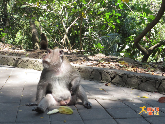 Monkey inside the Ubud Monkey Forest