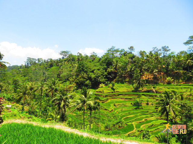 Rice paddies near Ubud