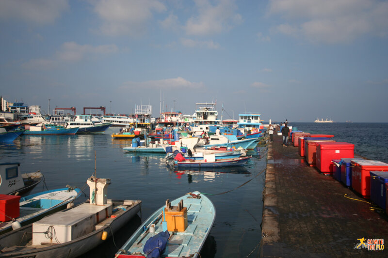 Harbor with all the fishing boats