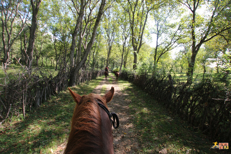 Riding inside the world's largest walnut forest