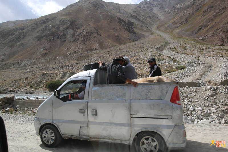 Public transport for people and livestock on the M41 Pamir Highway