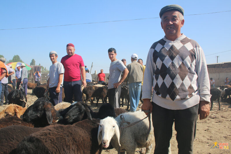 Local with his sheep