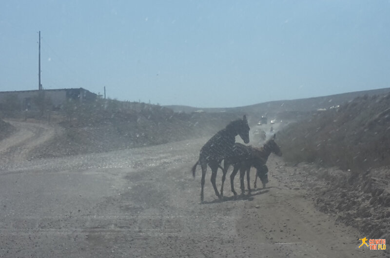 Donkeys on the road in the middle of nowhere