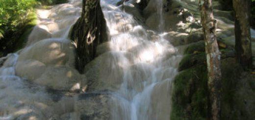 The unique Bua Tong Waterfalls