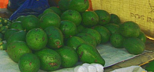 Some of the best avocados I had in a long time