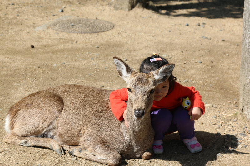 Countless deer in Nara