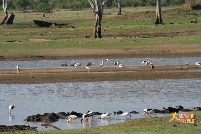 1508-Sri_Lanka_Safari_12