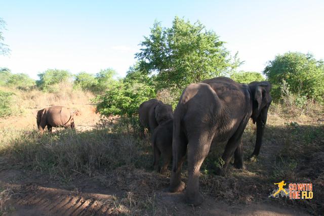 1508-Sri_Lanka_Safari_15