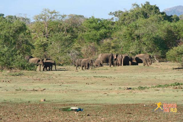 1508-Sri_Lanka_Safari_16