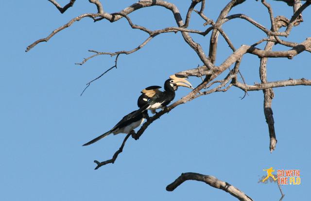 1508-Sri_Lanka_Safari_2