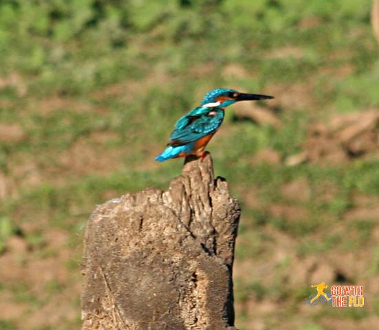1508-Sri_Lanka_Safari_3