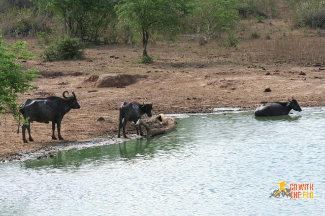 1508-Sri_Lanka_Safari_5